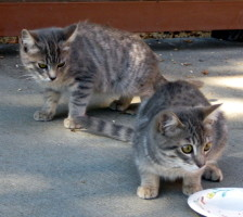 two cats near plate